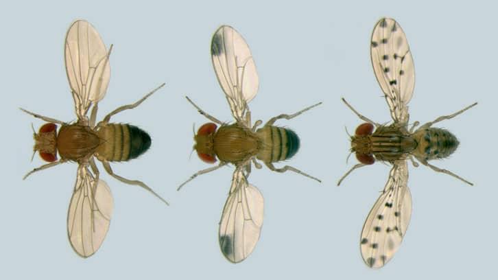 Little Buddy - Fruit Fly Poem by Eran Thomson